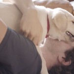 This Anti-Drunk Driving Commercial Involving a Puppy Is Now the Most Effective PSA Ever photo