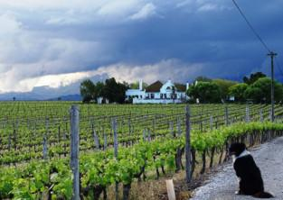 History And Wine In Robertson photo