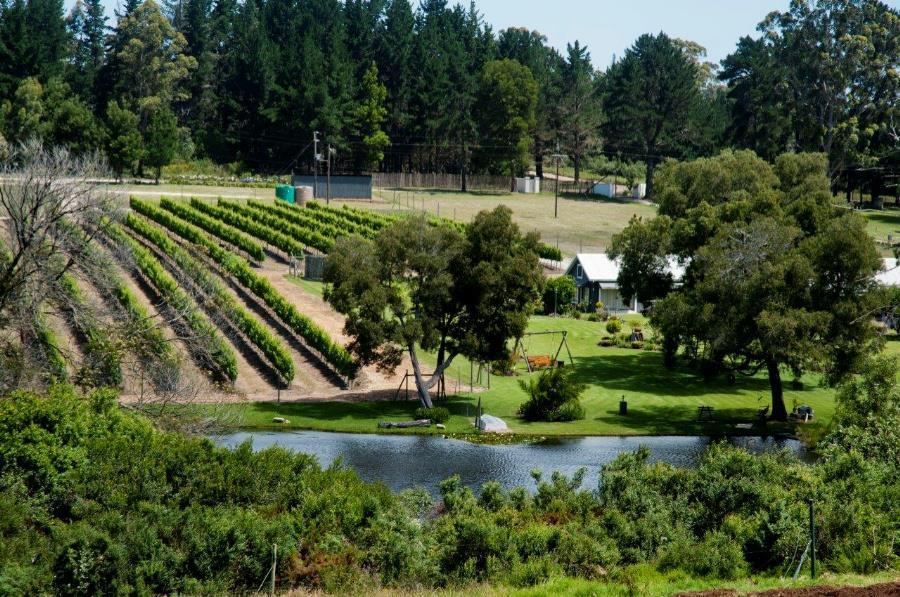 New Bubbly Wine Region a springboard for Plett photo