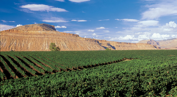 Raise a glass to Colorado`s wine harvest season photo