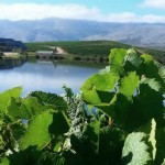 The Art of Winemaking: Terroir photo