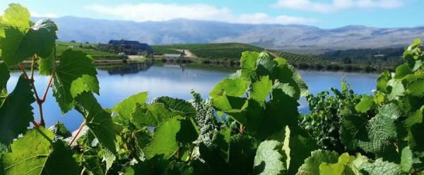 The Art of Winemaking: Terroir photo