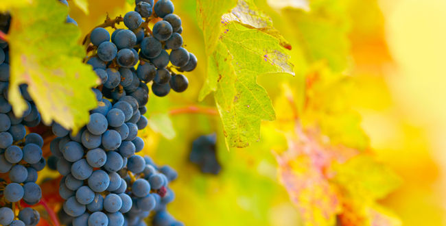 Why you need to visit Virginia wine country photo