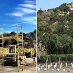 Napa Winemakers Argue Over the Valley`s Visual Image photo