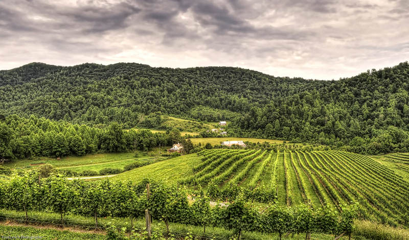 5 Under-the-Radar American Wine Regions You Need to Visit photo