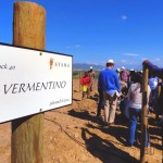 Ayama Wines celebrates 10 years of winemaking by planting South Africa`s first Vermentino photo