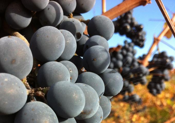 10 Craziest Grape Names photo