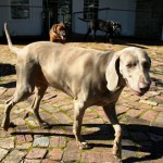Introducing Franschhoek Wine Dogs photo