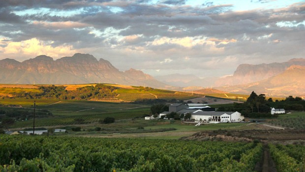 Great Wines Of South Africa That You Have To Try photo