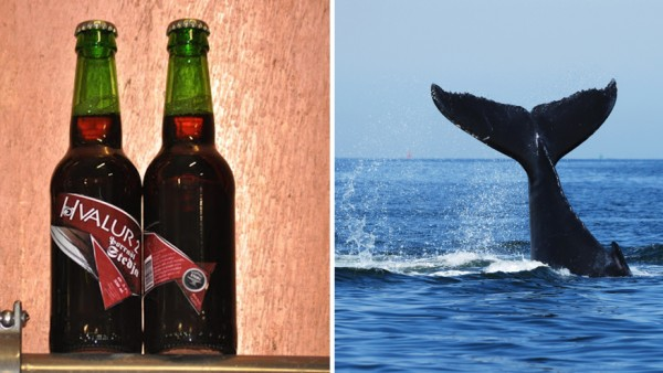 Would you try a beer made with whale testicles? photo