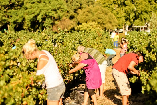 Participate in the Nederburg 'Harvest at Dusk' public day photo