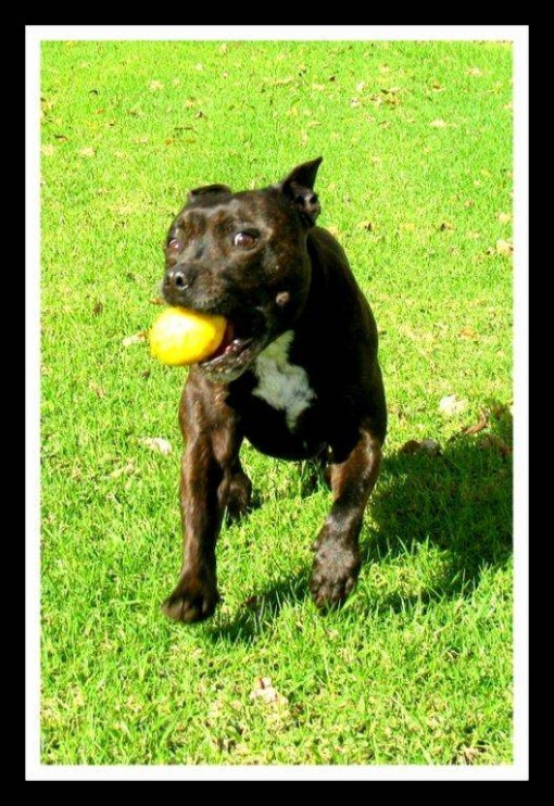 Franschhoek Wine Dog of the Month: February photo