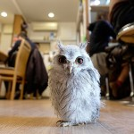 Move Over Cat Cafes, London is Getting an Owl Bar photo