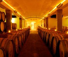 cellar Harvest News from Lanzerac Estate