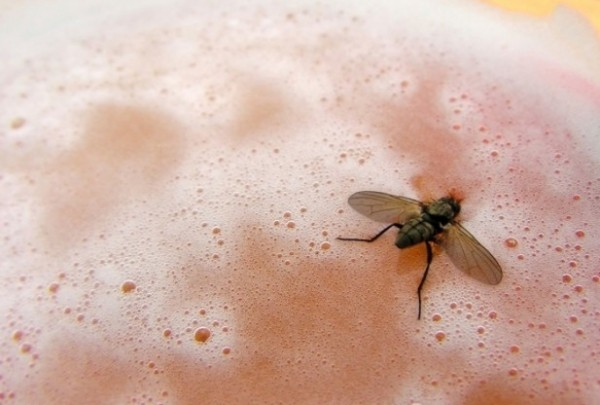 You Have Flies to Thank for That Pleasing Beer Smell photo