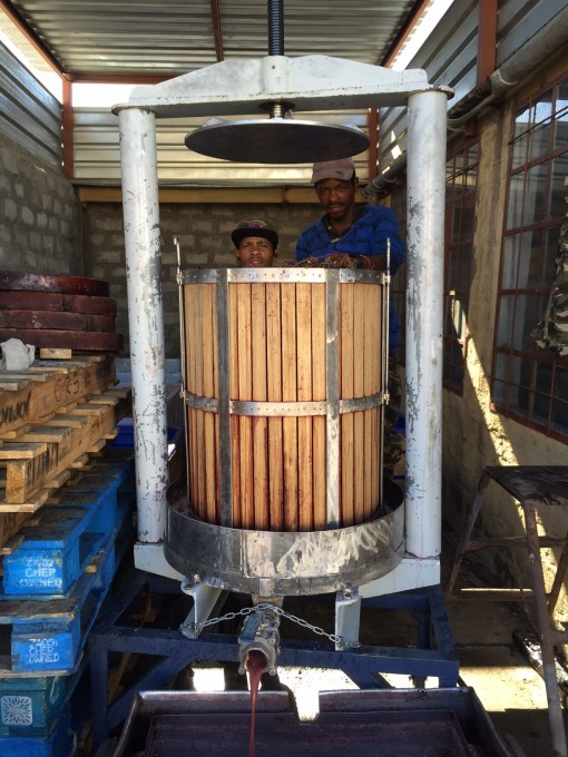 Boplaas busy producing its first Red Straw Wine photo