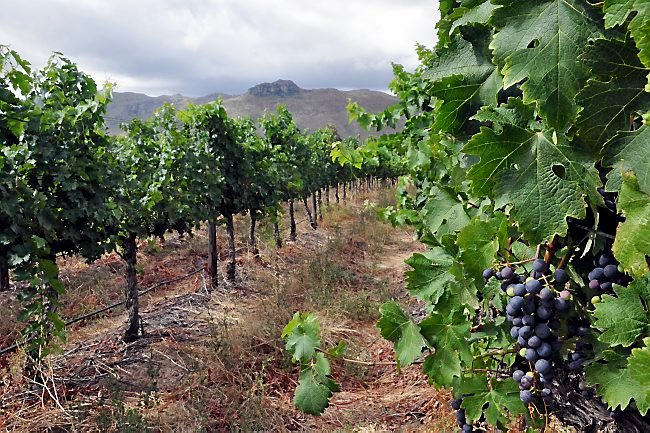 Follow South Africa?s Brandy Route For A Taste Of Some Of The Best photo