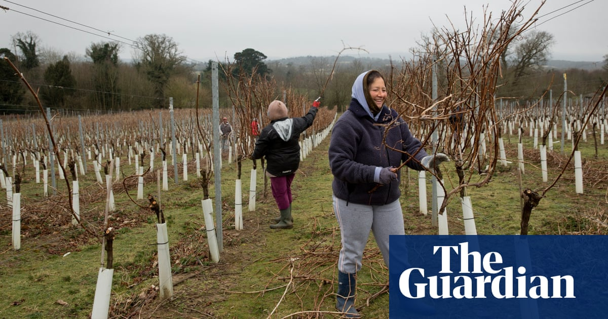 Sussex Vineyards In Bid To Put Themselves On Europe's Wine Map photo