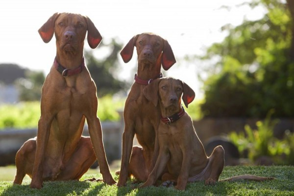 Franschhoek's Wine Dogs – Rez, Kika and Chase photo