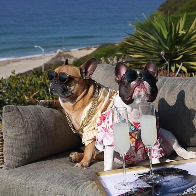 """Meet the Hilarious """"Drunk Dogs"""" of Instagram photo"""