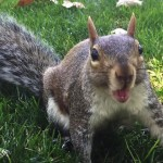 Drunk squirrel causes rampage at UK club photo