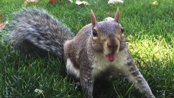 Drunk squirrel causes rampage at UK club photo