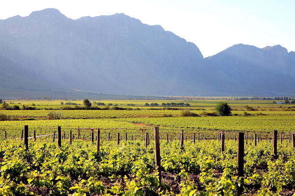 Breedekloof takes Ownership with Chenin Blanc Initiative photo