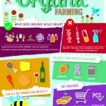 How to go organic without the stress this spring photo
