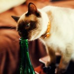 Give it up for this cat who drank 3 bottles of wine and survived photo