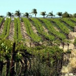 Glittering wine year for Orange River Cellars photo