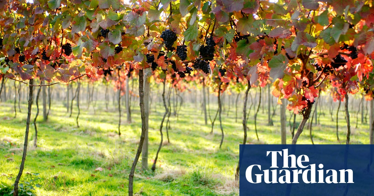 How English Wine Went From A Joke To Sales Of 6m Bottles A Year photo