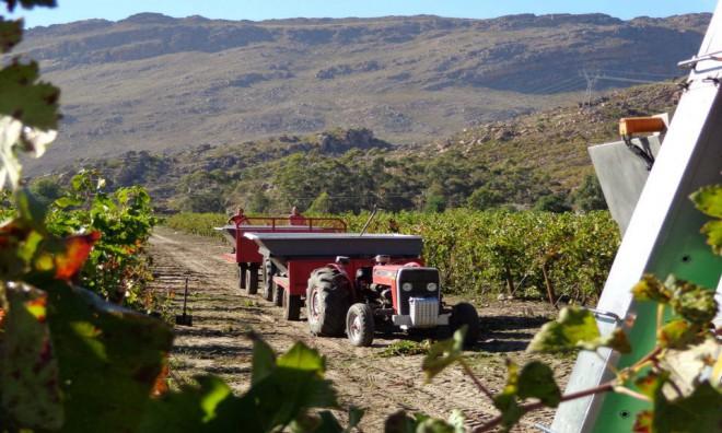 Heat is on for Du Toitskloof Wines 2016 Harvest photo