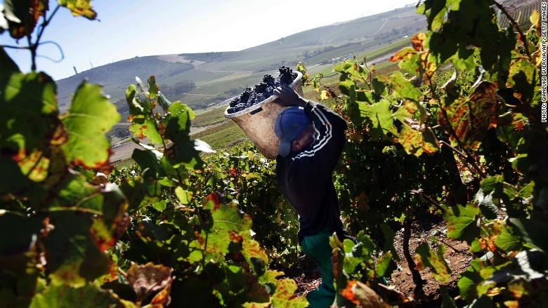 South Africa`s wine industry is booming photo