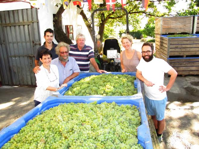Backsberg Estate Cellars Kicks-off Centenary Year With Early and Hot Harvest photo