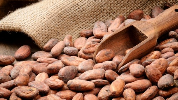Coffee farmers switch to cocoa due to climate change photo