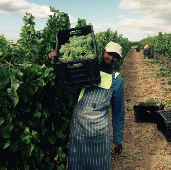 Harvest Report and Upcoming Festival at Benguela Cove Lagoon Wine Estate photo