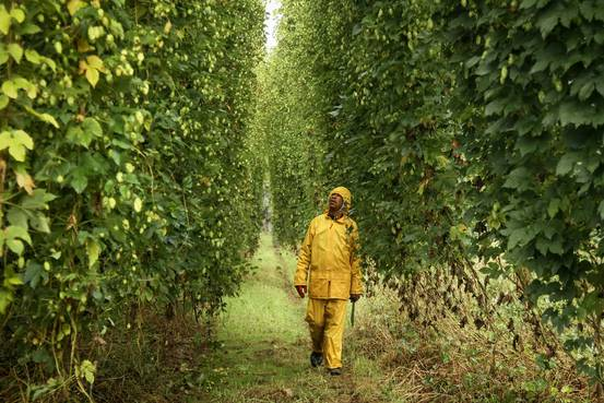 Beer Megadeal Faces a Tall Hurdle in South Africa photo