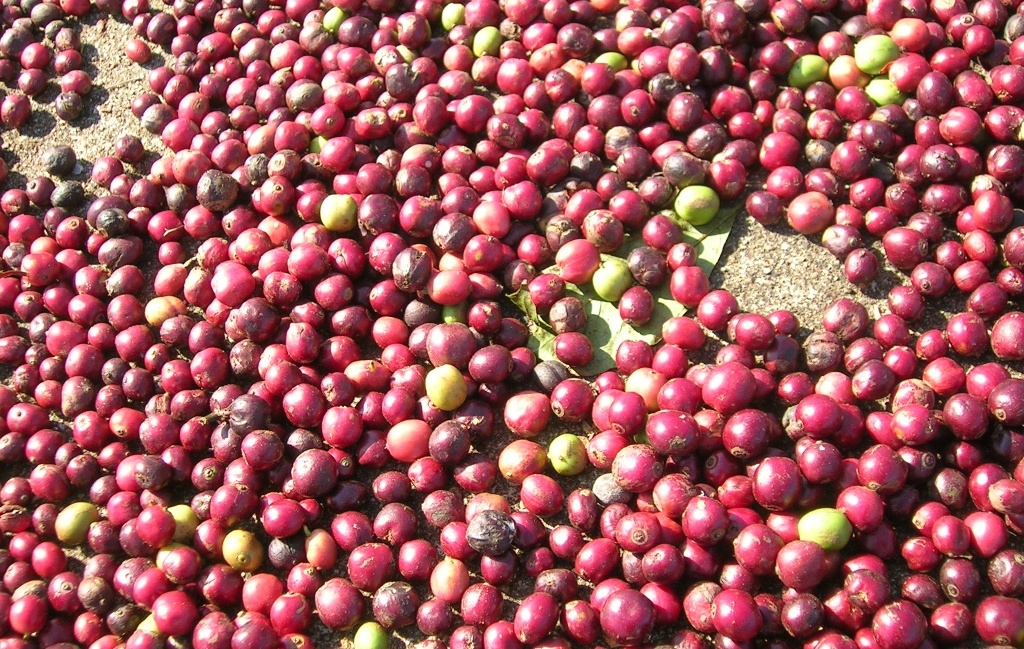 Why Naturals Should Play a Big Role in the Future of Specialty Coffee photo