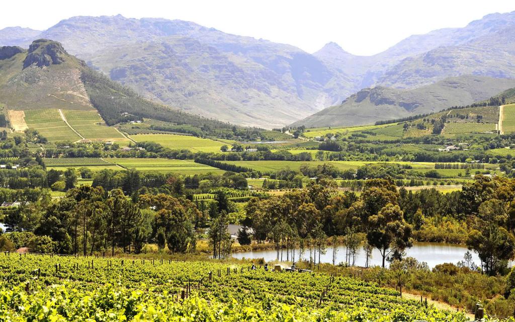Interview with South African Wine Guru – Allister Kreft photo