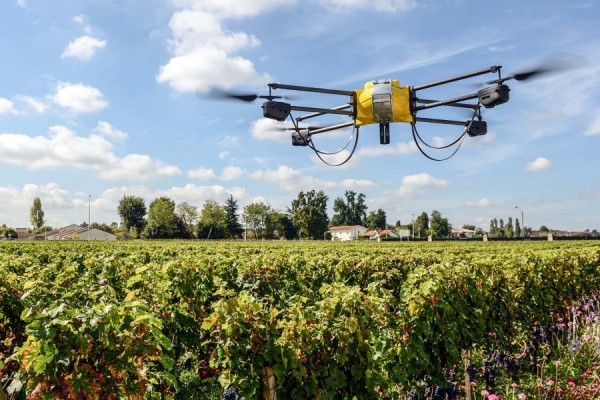 This California Vineyard Is Using Drones to Make Better Wine photo