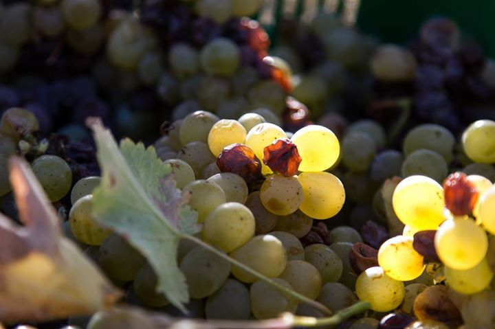 De Grendel Harvest 2018 In Videos photo