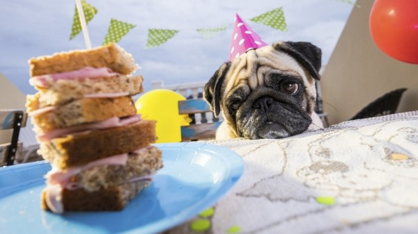 London is getting a dog brunch cafe with pooch-friendly beer photo