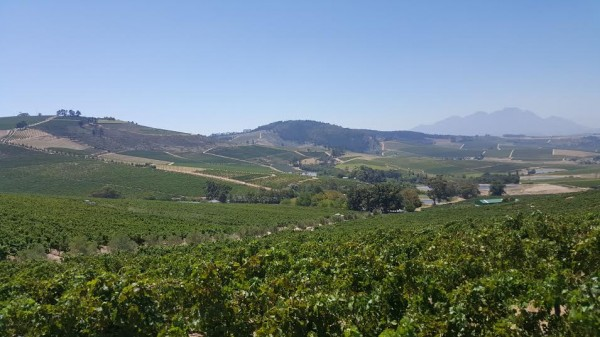 Jordan Wine Estate takes action against Global warming photo