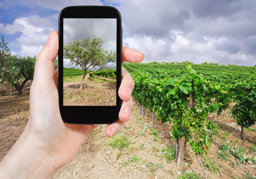 A Glimpse of iGeneration Wine Preferences photo
