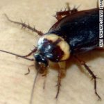 Cockroach milk: The drink you didn't know you've been missing photo