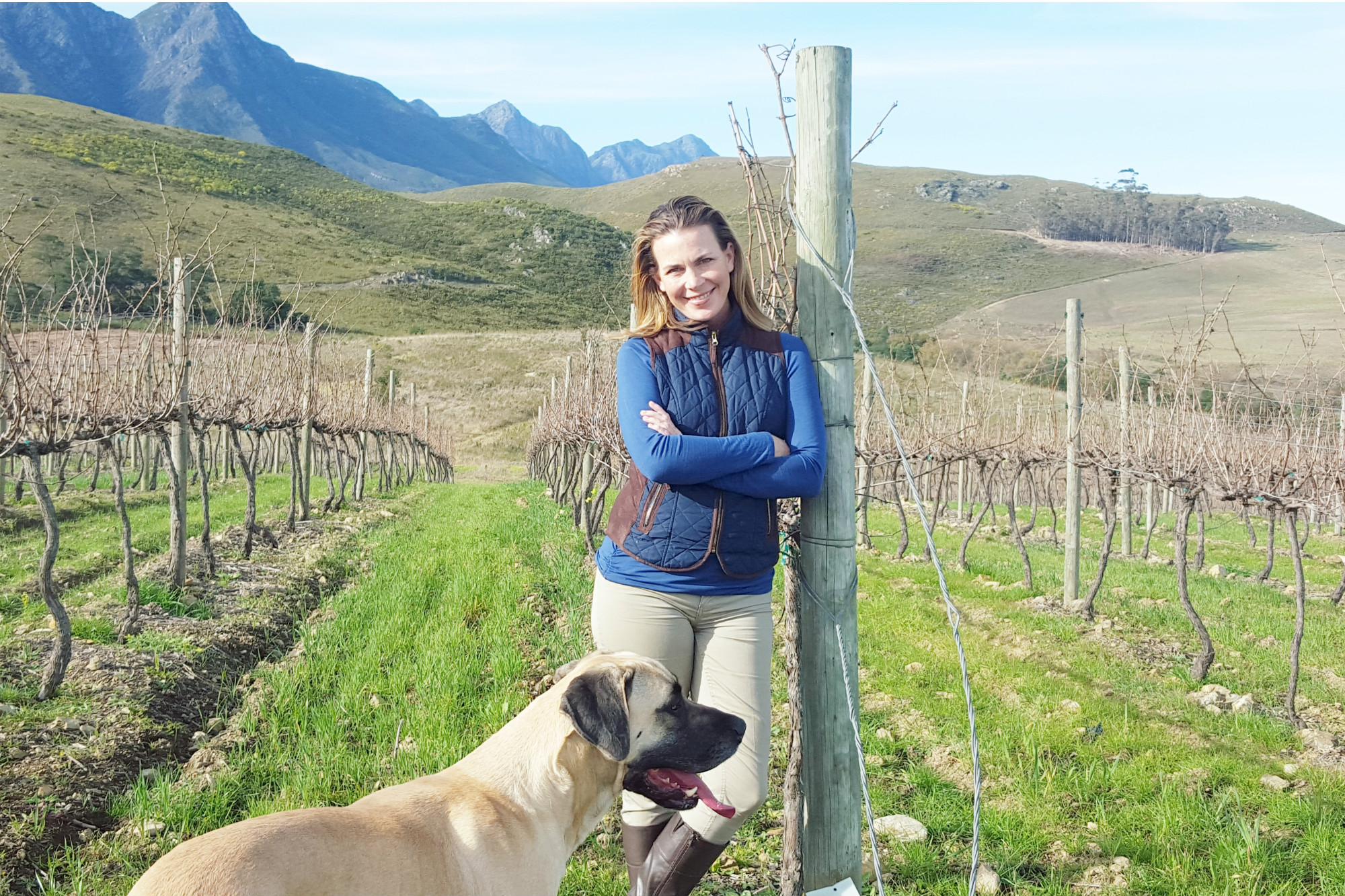 LA Transplant Scores With South African Wine | Ilana Sharlin Stone photo