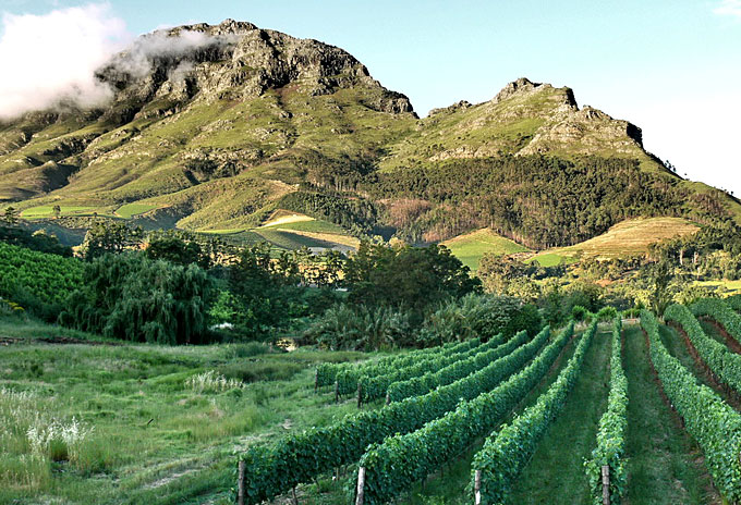 Holidays to South Africa – visiting the celebrated wine regions photo
