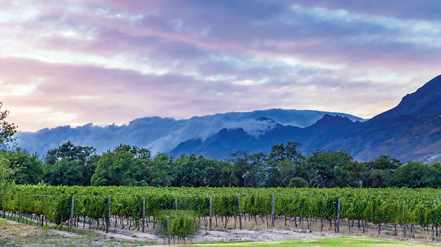5 Best Estates To Visit In The Cape Winelands Region photo
