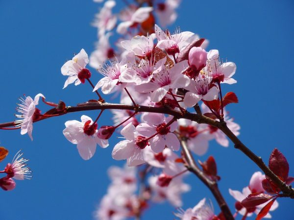 Celebrate the arrival of Spring at the De Krans Blossom Festival photo