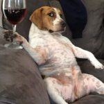 Fancy Wine Pairings Lazy People Will Love photo